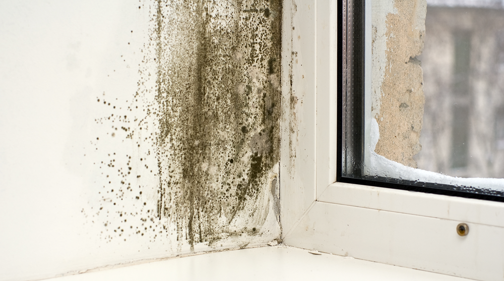 Mould on the corner of a room